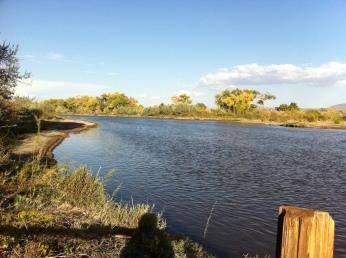 Rio Grande in der Nähe von Albuquerque, NM