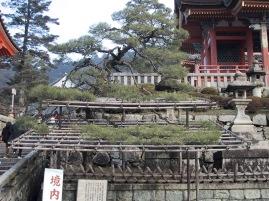 Kiyomizudera Tempel Anlage, Bonsai Zuchtanlage