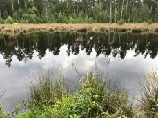 Gründlacher Moor