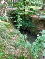 kleiner Bach im Wald