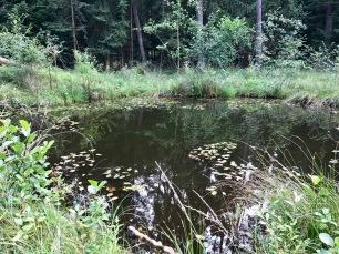 kleiner Teich mit Spiegelung