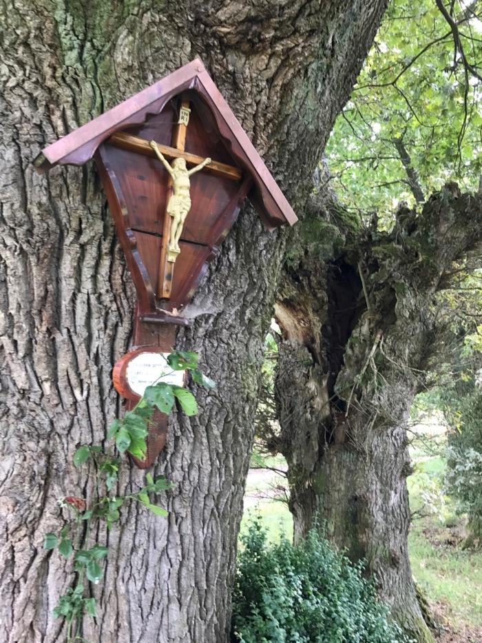 schöner alter Baum mit Kreuz