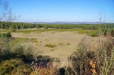 Blick von der Mitte des Gelände nach Nordosten