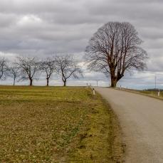 Baum an der Straße