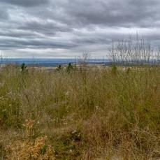 Blick über Sträucher ins Tal