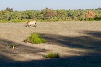 Wildpferdegehege