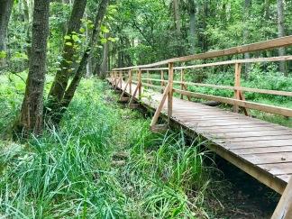 Holzbrücke im Wald