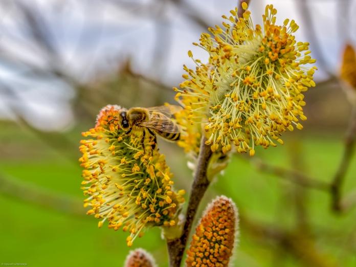 Was für ein schöner Anblick, die Bienen sind wieder unterwegs 😀
