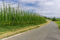 Hopfenanbaugebiet in Lilling