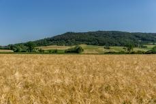 Kornfeld mit Hetzleser Berg