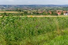 Blick ins Regnitztal mit Blumenwiese