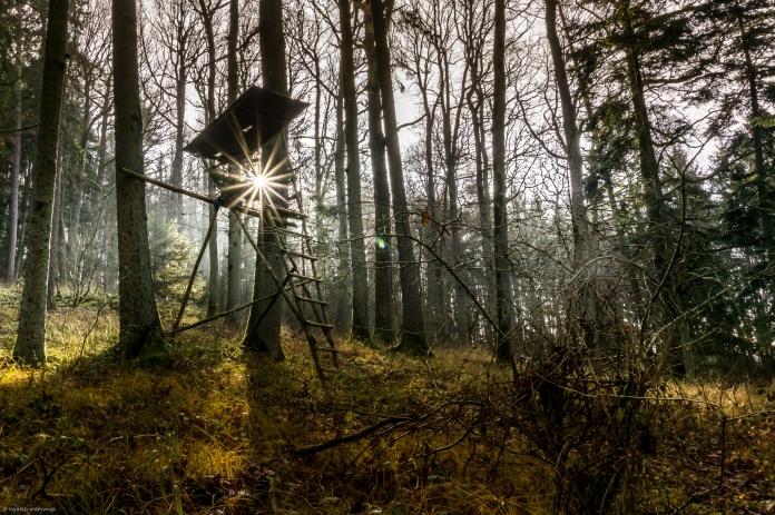 Sonne im Haarbachwald