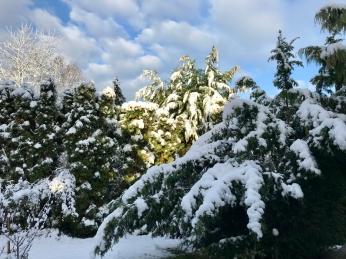 Schneesturm sorgt für Chaos