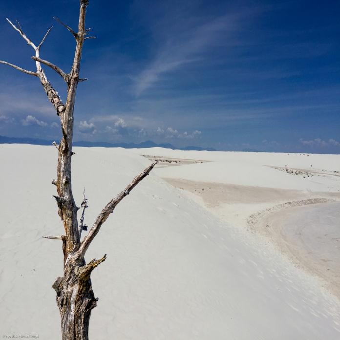 Toter Baum in der weißen Sandwüste