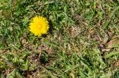 Trotz Corona den Frühling genießen