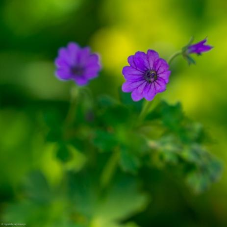 Wald- und Wiesenblumen